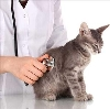 Ветеринарные клиники в Сургуте